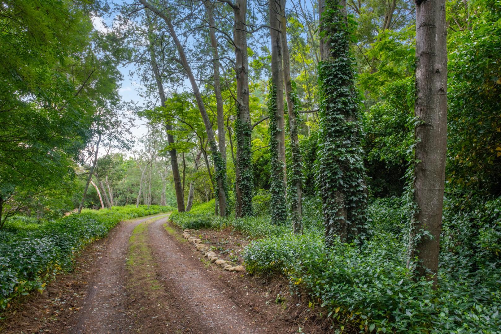 195 Tyntesfield Road, Waihopai Valley #17 -- listing/11781/q-v4.jpeg