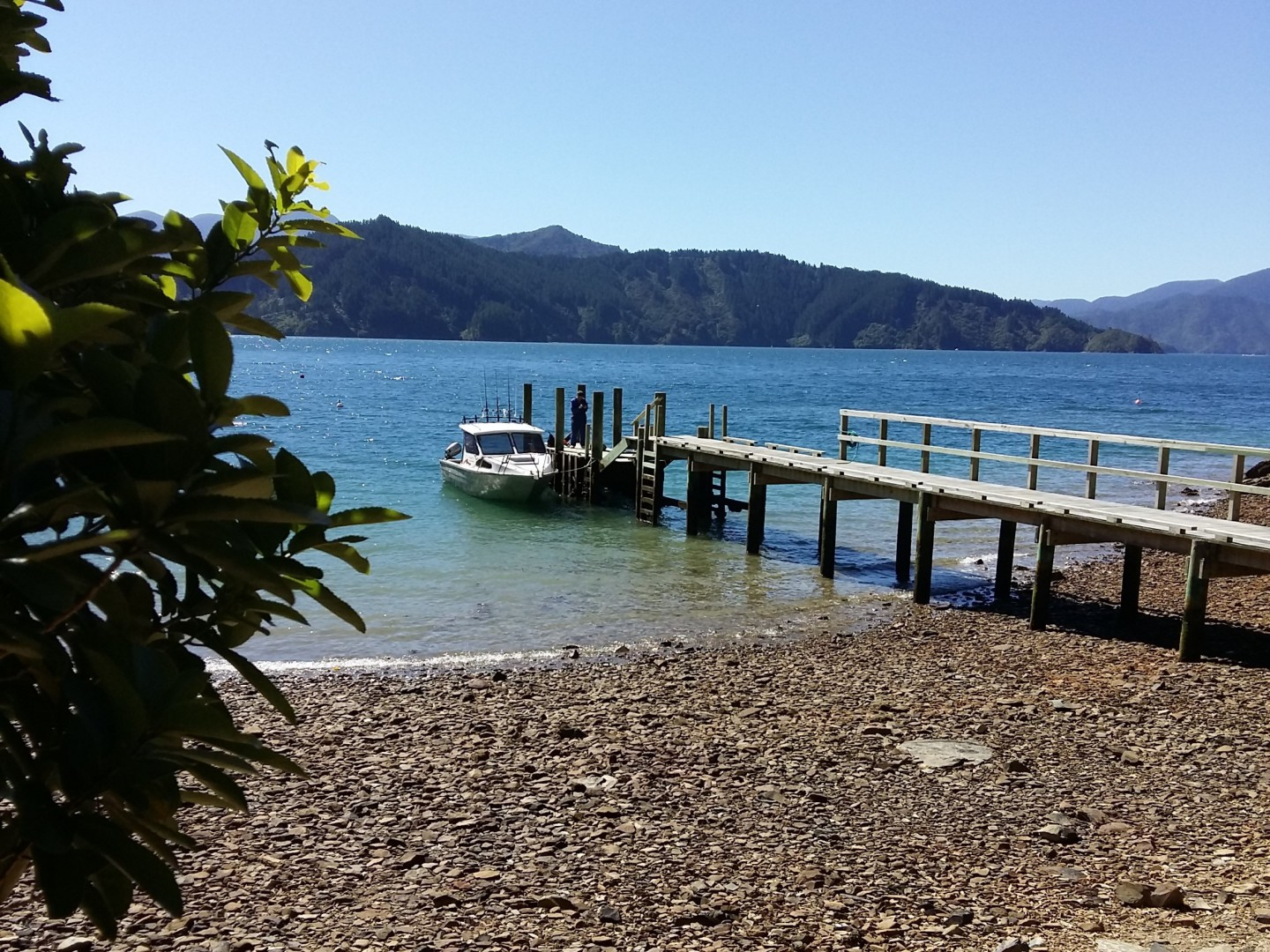 - Driftwood Bay, Arapawa Island, Marlborough Sounds #5 -- listing/11929/d.jpeg
