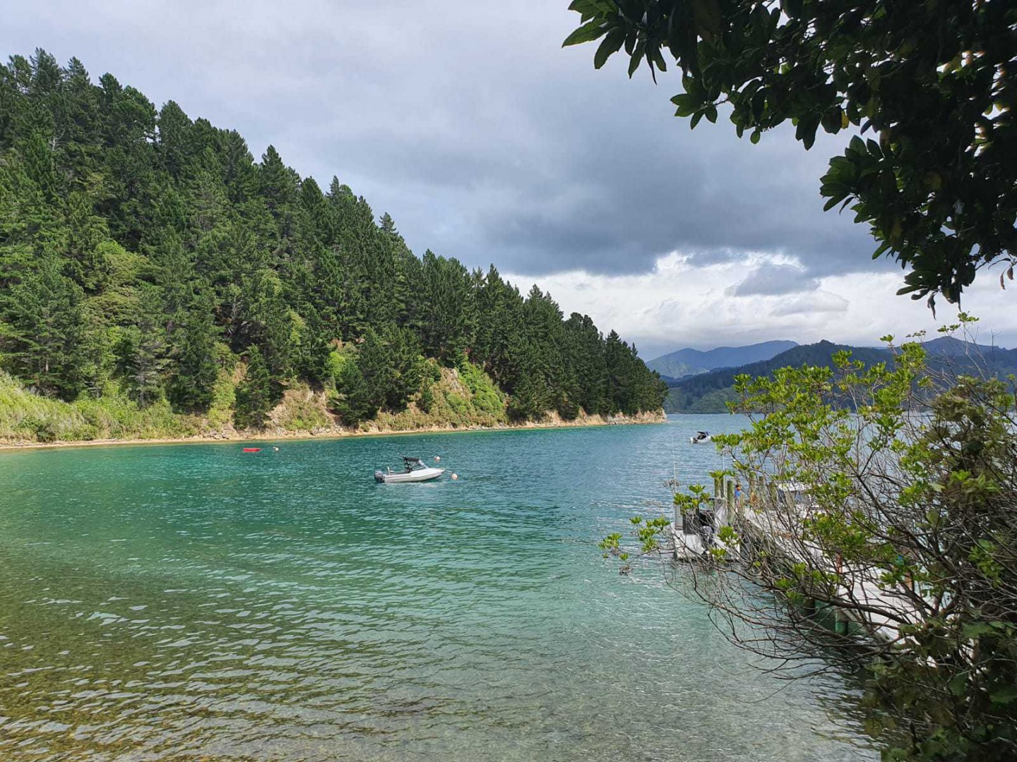 - Driftwood Bay, Arapawa Island, Marlborough Sounds #13 -- listing/11929/l.jpeg
