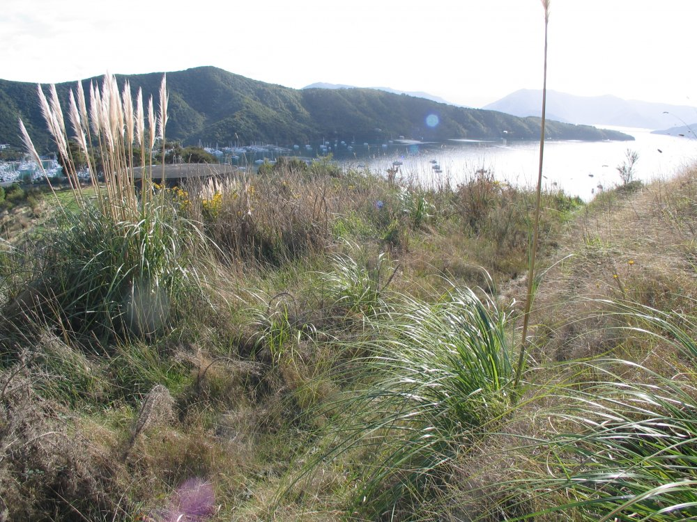 Lot 2 Waimarama Street, Picton #5