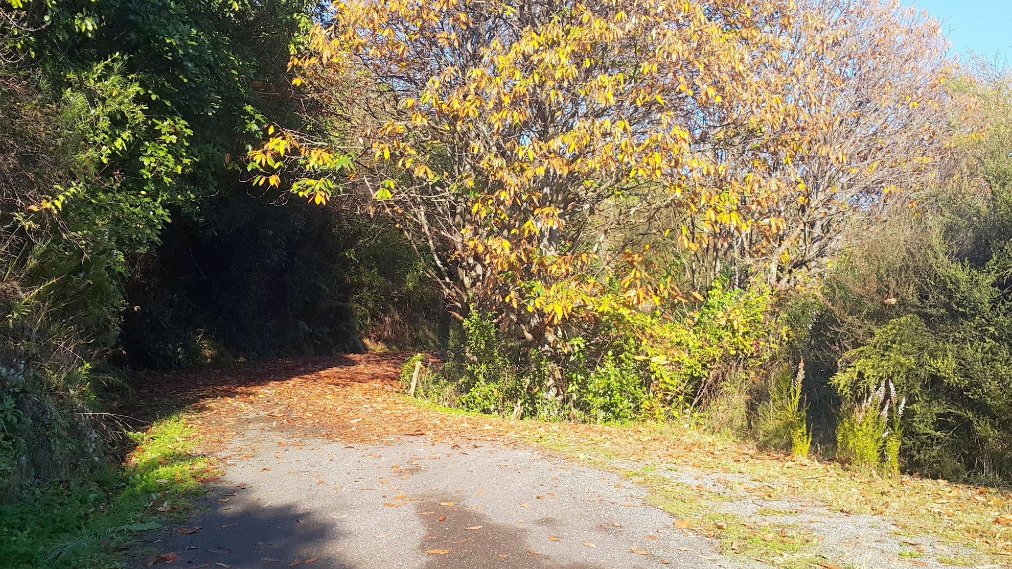 215 Queen Charlotte Drive, Havelock #7 -- listing/4239/f.jpeg