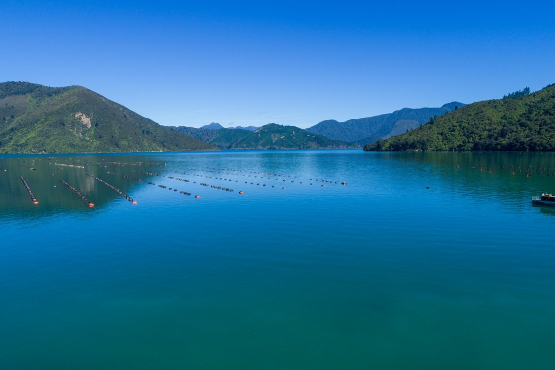 - Nikau Bay, Pelorus Sounds #2