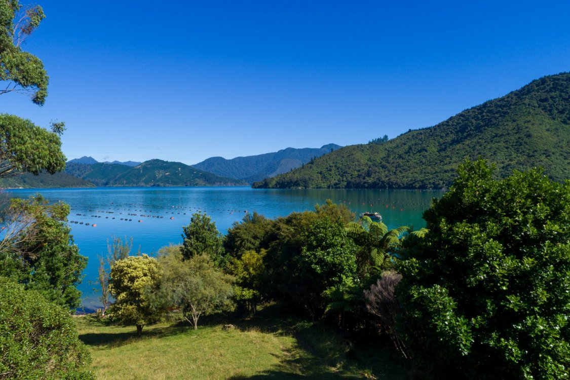 - Nikau Bay, Pelorus Sounds #1