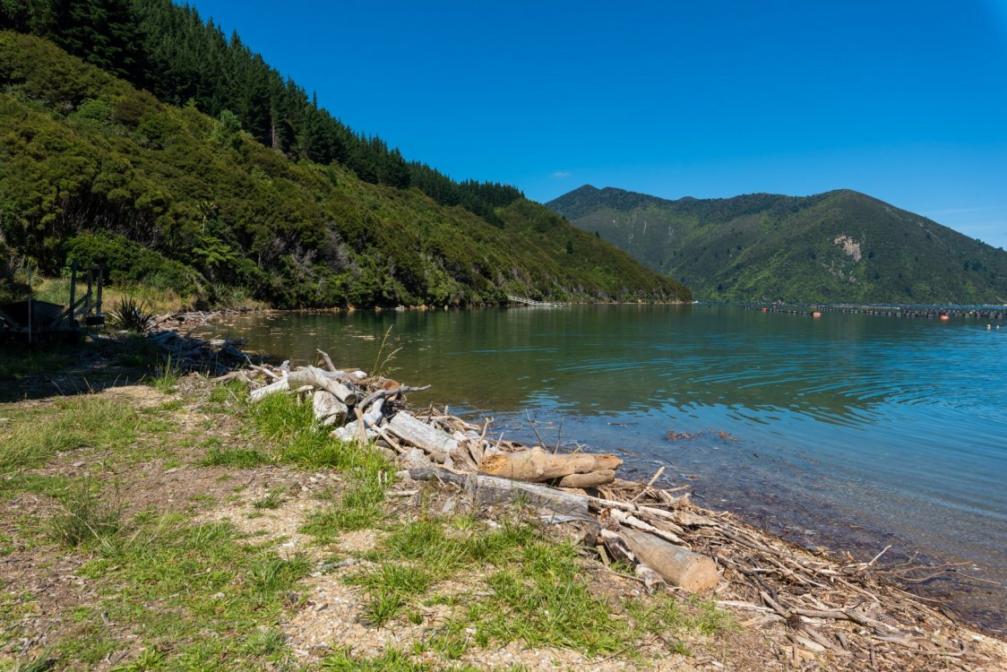 - Nikau Bay, Pelorus Sounds #22