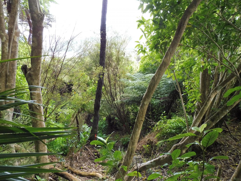126 Moetapu Bay Road, Mahau Sound #9 -- listing/5957/h.jpeg