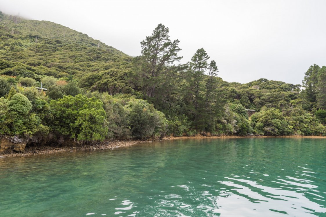 Lot 1 Miro Bay, Pelorus Sounds #5