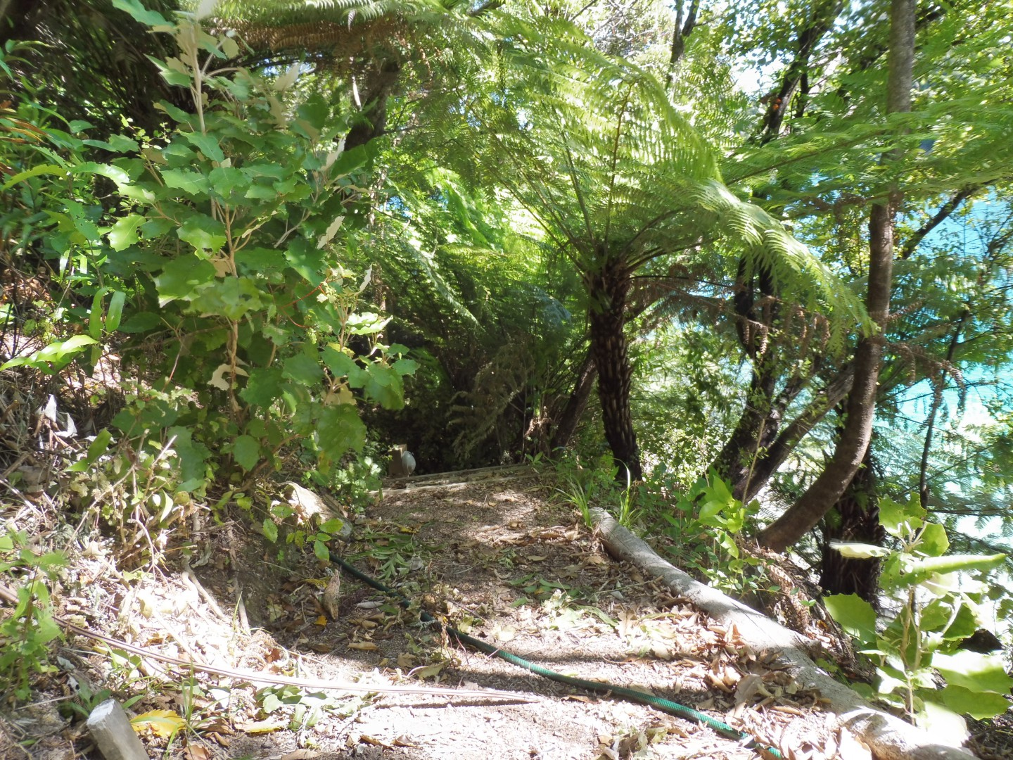 Lot 4 Double Cove, Queen Charlotte Sound #5 -- listing/9814/d.jpeg