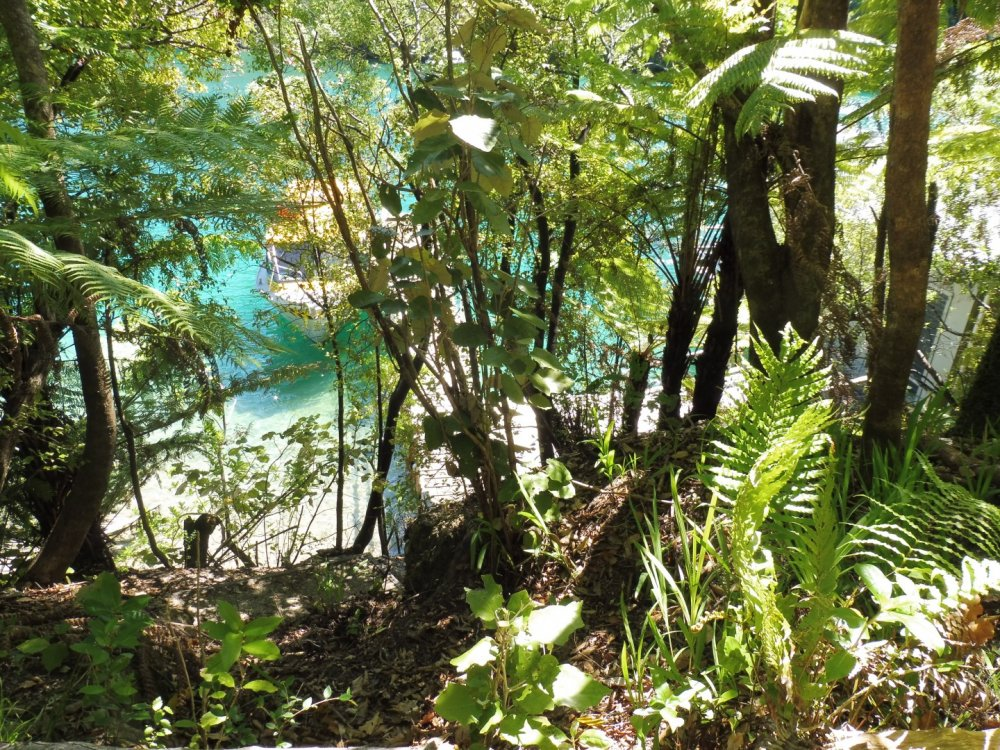 Lot 4 Double Cove, Queen Charlotte Sound #6