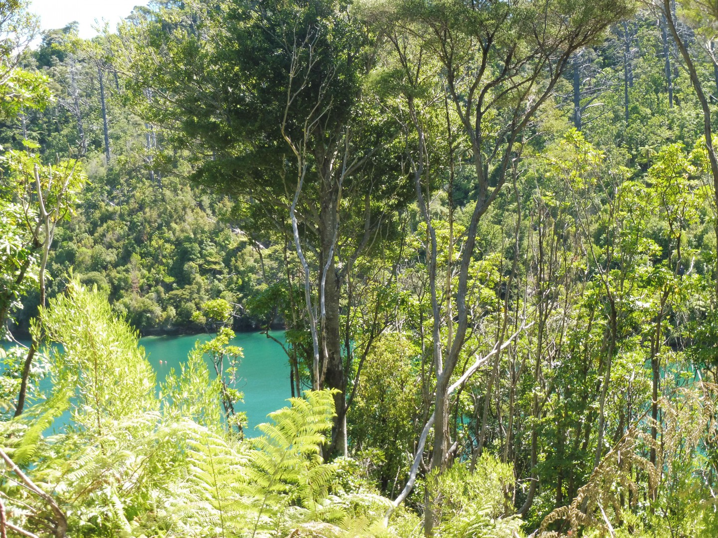 Lot 4 Double Cove, Queen Charlotte Sound #7 -- listing/9814/f.jpeg