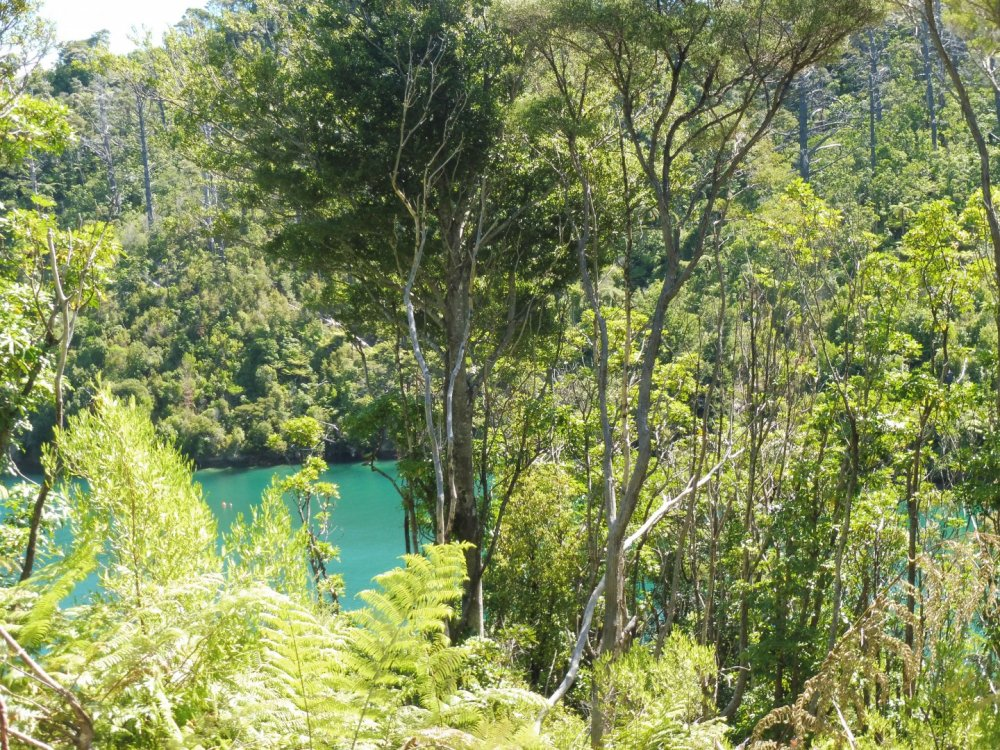 Lot 4 Double Cove, Queen Charlotte Sound #7