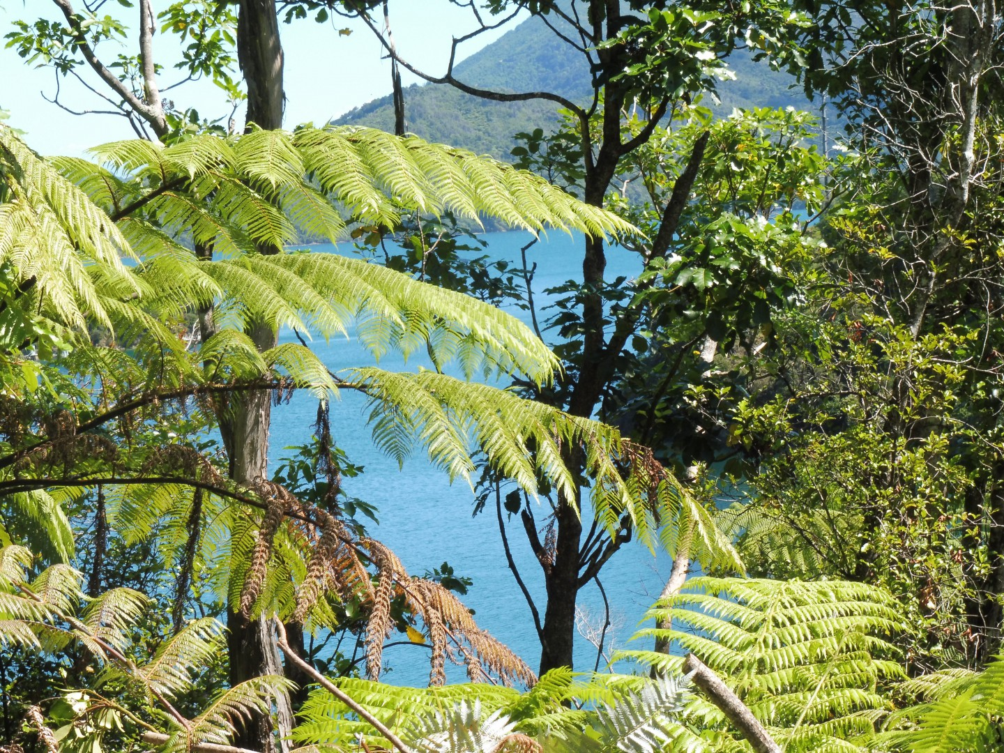 Lot 4 Double Cove, Queen Charlotte Sound #8 -- listing/9814/g.jpeg