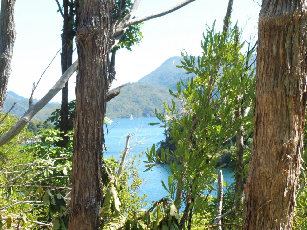 Lot 4 Double Cove, Queen Charlotte Sound #9