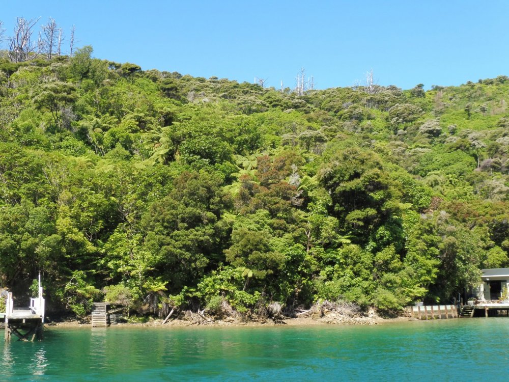 Lot 4 Double Cove, Queen Charlotte Sound #12