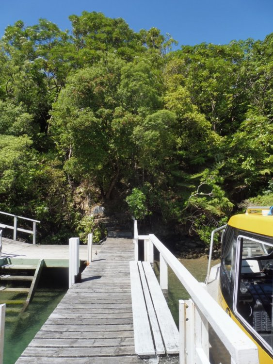 Lot 4 Double Cove, Queen Charlotte Sound #1